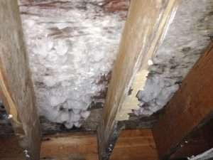 mold growth removal