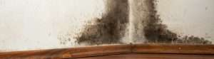 mold damage banner